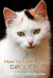 How To Clean Kittens Ears - Safe, Natural At Home Cat Ear Cleaning Method