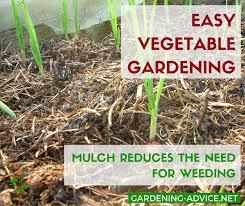 mulching saves time in the garden gardening gardeningtips permaculture homesteadgarden organicgardening