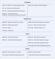 Biomedical Engineering Undergraduate Curriculum Information | Yale ...