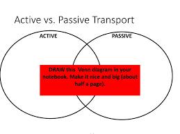 Active Vs Passive Transport Venn Diagram Unit 6 Cellular Transport Ppt Download
