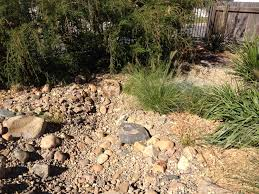 Small Picture Dry Creek Bed Design Installation Sunshine Coast Organic