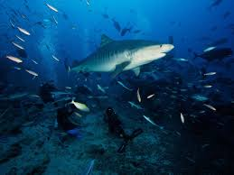best places to swim sharks photos conde nast traveler 10 best places to swim sharks