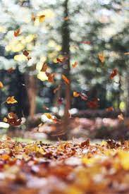 Fall Wallpapers: Free HD Download [500+ ...