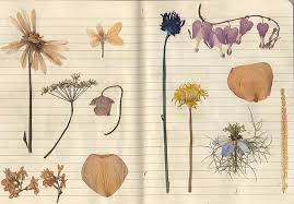 Flower Pressed Paper Untitled Flickr Photo Sharing On We Heart It