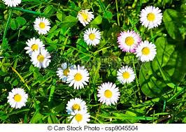 grass and flowers background.  Flowers Top View Of Green Grass And Flowers Background  Csp9045504 Throughout Grass And Flowers Background D