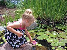 types of aquatic plants for ponds 11