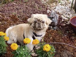 dog digging up garden beds