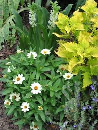 container garden plans. zinnia combined with foliage container garden plans