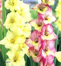 hirts garden garden garden bulbs gardens free code hirts gardens code hirts garden