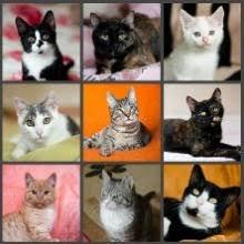 Купить <b>Сухой корм Karmy Maine</b> для котят с индейкой в Сургуте ...