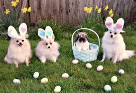 petsmart animals bunny. Plain Petsmart PetsmartBunny In Petsmart Animals Bunny H