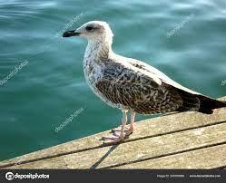 Seagull Marina Bird Albatros Sea ⬇ Stock Photo, Image by © foxik7@yandex.ru  #204789006