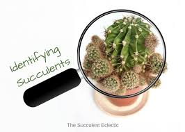 Identifying Types Of Succulents With Pictures The