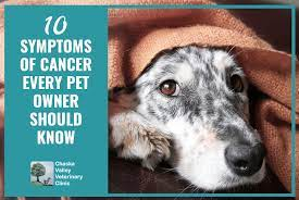 10 symptoms of cancer every pet owner