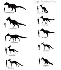 animal sizes chart metazoica size charts current project