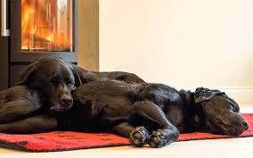 pet friendly rugs best dog crate furniture pet hair friendly area rugs pet friendly indoor outdoor