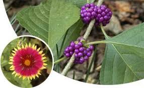 Best 25 Florida Gardening Ideas On Pinterest  Florida Fruit Trees For North Florida