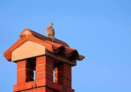 Royalty free birds on chimney photos   Pikist