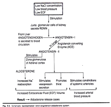 The Ranin Angiotensin Aldosterone System
