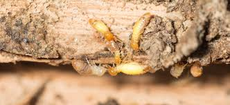 Image result for termite problem should be regarded as an emergency