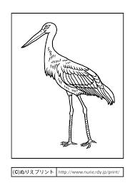コウノトリ鸛鵠の鳥主線黒兵庫県の鳥無料塗り絵都道府県