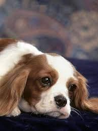 Phone - Cute Dog Mobile Wallpaper Hd ...