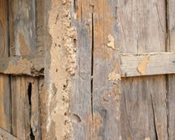 although termite activity peaks in the spring and summer they are active all year round all they need to survive is moisture wood and