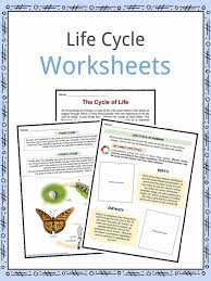 Life Cycle Facts, Worksheets, Examples & Stages Of Life For Kids