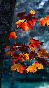 Fall iPhone Wallpapers Pinterest (Page ...