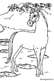 Paarden Kleurplaat 401683 Kleurplaat