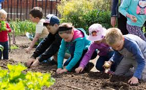 Kitchen Garden Program Little Sprouts Kitchen Garden Learning Program 2017 Bookings
