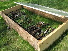viola didn t we say it was easy the hardest part is remembering that those little plants in there still need air try to open the cold frame up at least a