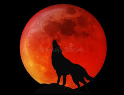 Brown and black wolf digital wallpaper, artwork, planet, space. 68 899 Wolf Photos Free Royalty Free Stock Photos From Dreamstime
