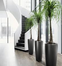 Plants For The Office In Los Angeles  San Diego CA - Interior exterior designs