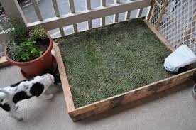 Diy Sod I Made This Doggy Potty Island Out Of Kiddie Swimming Pool Palm