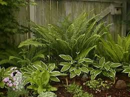 Small Picture 177 best Hidden Garden images on Pinterest Shade garden Gardens