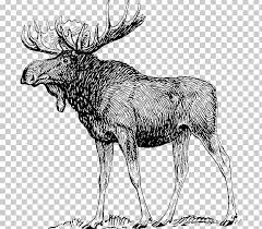 Deer Human Body Anatomy Elk Muscle Png Clipart Alaska