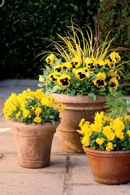Bright Gold Fall Container Gardens