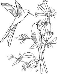 Small Picture Printable Color Picture Hummingbird Printable Coloring Pages