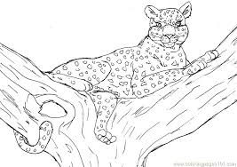 Cheetah Coloring Pages Leopard Coloring Page Valentinamionme
