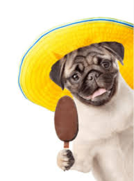 can dogs eat chocolate ice cream