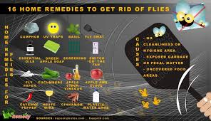16 Home Reme s to Get Rid of Flies