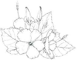 Flowers Coloring Pages For Preschoolers Printable Flower Coloring