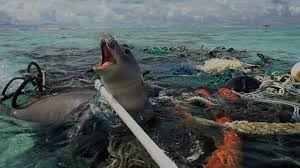 a world of waste effect of poor waste management on the planet  seal stuck in plastic pollution in the ocean