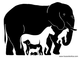 Resultado de imagem para dia mundial da medicina veterinaria em 2016
