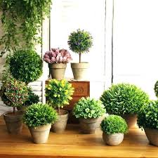 cheap office plants. Home Indoor Plants Decorative Plant Decor Common House On . Cheap Office