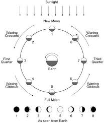 cd752bfb1239c1d880c0e77067dc3a13 classical conversations cycle study skills 387 best images about cycle 2 on pinterest solar system, food on naming acids and bases worksheet answer key