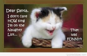 dear santa funny cat quote
