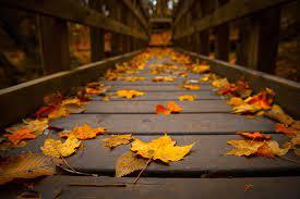 Autumn leaves wallpaper, Leaf wallpaper ...