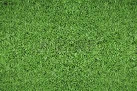 5540073greengrassbackgroundofsoccerfield green grass soccer field u16 green